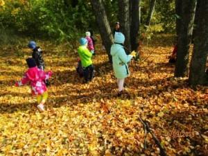 сбор осенних листьев